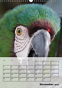 Aras. Der Papageien-Planer (Wandkalender 2019 DIN A3 hoch) - Produktdetailbild 11
