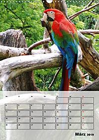 Aras. Der Papageien-Planer (Wandkalender 2019 DIN A3 hoch) - Produktdetailbild 3