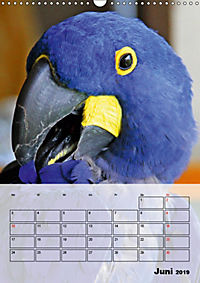 Aras. Der Papageien-Planer (Wandkalender 2019 DIN A3 hoch) - Produktdetailbild 6
