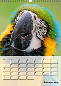 Aras. Der Papageien-Planer (Wandkalender 2019 DIN A3 hoch) - Produktdetailbild 1