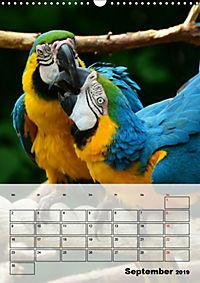 Aras. Der Papageien-Planer (Wandkalender 2019 DIN A3 hoch) - Produktdetailbild 9