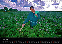 Arcadian Dreams Revisited Traditional farmers of Holland 2019 (Wall Calendar 2019 DIN A4 Landscape) - Produktdetailbild 7