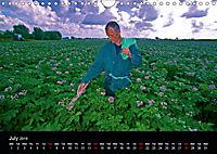 Arcadian Dreams Revisited Traditional farmers of Holland 2019 (Wall Calendar 2019 DIN A4 Landscape) - Produktdetailbild 7