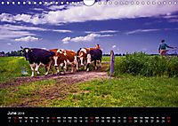 Arcadian Dreams Revisited Traditional farmers of Holland 2019 (Wall Calendar 2019 DIN A4 Landscape) - Produktdetailbild 6