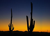 Arizona! / UK-Version (Poster Book DIN A3 Landscape) - Produktdetailbild 8