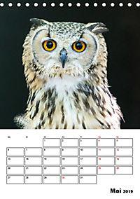 Artenvielfalt Tiere (Tischkalender 2019 DIN A5 hoch) - Produktdetailbild 5