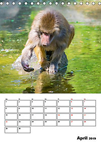 Artenvielfalt Tiere (Tischkalender 2019 DIN A5 hoch) - Produktdetailbild 4