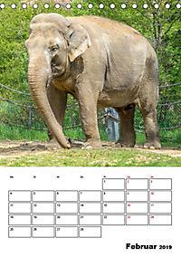 Artenvielfalt Tiere (Tischkalender 2019 DIN A5 hoch) - Produktdetailbild 2