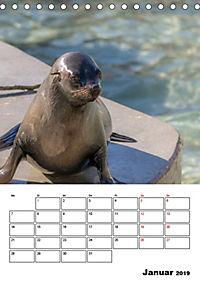Artenvielfalt Tiere (Tischkalender 2019 DIN A5 hoch) - Produktdetailbild 1
