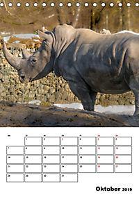 Artenvielfalt Tiere (Tischkalender 2019 DIN A5 hoch) - Produktdetailbild 10