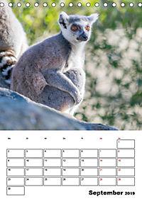 Artenvielfalt Tiere (Tischkalender 2019 DIN A5 hoch) - Produktdetailbild 9