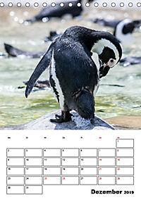 Artenvielfalt Tiere (Tischkalender 2019 DIN A5 hoch) - Produktdetailbild 12