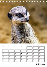 Artenvielfalt Tiere (Tischkalender 2019 DIN A5 hoch) - Produktdetailbild 3