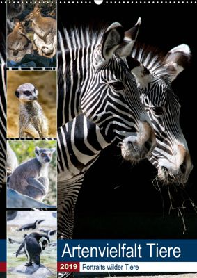 Artenvielfalt Tiere (Wandkalender 2019 DIN A2 hoch), Karin Sigwarth