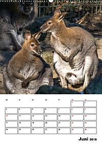 Artenvielfalt Tiere (Wandkalender 2019 DIN A2 hoch) - Produktdetailbild 6