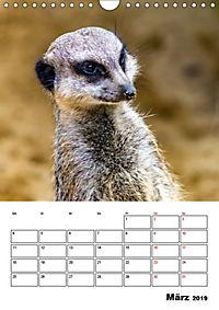 Artenvielfalt Tiere (Wandkalender 2019 DIN A4 hoch) - Produktdetailbild 3