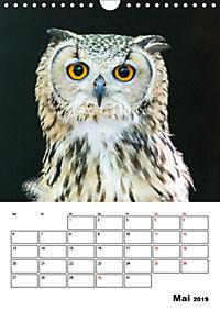 Artenvielfalt Tiere (Wandkalender 2019 DIN A4 hoch) - Produktdetailbild 5