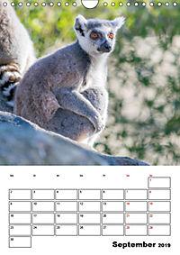 Artenvielfalt Tiere (Wandkalender 2019 DIN A4 hoch) - Produktdetailbild 9