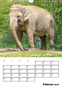 Artenvielfalt Tiere (Wandkalender 2019 DIN A4 hoch) - Produktdetailbild 2