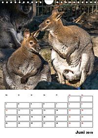 Artenvielfalt Tiere (Wandkalender 2019 DIN A4 hoch) - Produktdetailbild 6