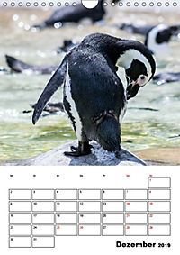 Artenvielfalt Tiere (Wandkalender 2019 DIN A4 hoch) - Produktdetailbild 12