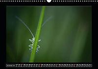 As high as ants (Wall Calendar 2019 DIN A3 Landscape) - Produktdetailbild 11