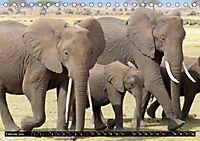 Asiatische und afrikanische Elefanten (Tischkalender 2019 DIN A5 quer) - Produktdetailbild 2