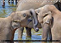 Asiatische und afrikanische Elefanten (Tischkalender 2019 DIN A5 quer) - Produktdetailbild 5