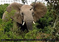 Asiatische und afrikanische Elefanten (Tischkalender 2019 DIN A5 quer) - Produktdetailbild 6