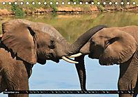 Asiatische und afrikanische Elefanten (Tischkalender 2019 DIN A5 quer) - Produktdetailbild 12