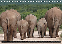 Asiatische und afrikanische Elefanten (Tischkalender 2019 DIN A5 quer) - Produktdetailbild 8