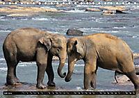 Asiatische und afrikanische Elefanten (Tischkalender 2019 DIN A5 quer) - Produktdetailbild 7