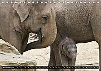 Asiatische und afrikanische Elefanten (Tischkalender 2019 DIN A5 quer) - Produktdetailbild 11