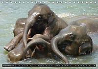Asiatische und afrikanische Elefanten (Tischkalender 2019 DIN A5 quer) - Produktdetailbild 9
