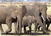 Asiatische und afrikanische Elefanten (Wandkalender 2019 DIN A4 quer) - Produktdetailbild 2