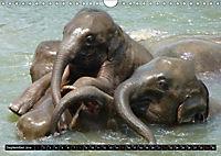 Asiatische und afrikanische Elefanten (Wandkalender 2019 DIN A4 quer) - Produktdetailbild 9