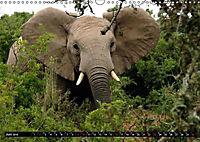 Asiatische und afrikanische Elefanten (Wandkalender 2019 DIN A3 quer) - Produktdetailbild 6