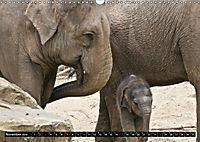 Asiatische und afrikanische Elefanten (Wandkalender 2019 DIN A3 quer) - Produktdetailbild 11