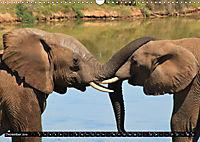 Asiatische und afrikanische Elefanten (Wandkalender 2019 DIN A3 quer) - Produktdetailbild 12