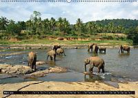 Asiatische und afrikanische Elefanten (Wandkalender 2019 DIN A2 quer) - Produktdetailbild 3