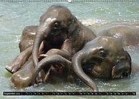 Asiatische und afrikanische Elefanten (Wandkalender 2019 DIN A2 quer) - Produktdetailbild 9