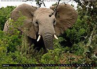 Asiatische und afrikanische Elefanten (Wandkalender 2019 DIN A2 quer) - Produktdetailbild 6
