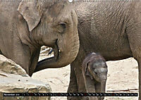 Asiatische und afrikanische Elefanten (Wandkalender 2019 DIN A2 quer) - Produktdetailbild 11