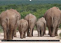Asiatische und afrikanische Elefanten (Wandkalender 2019 DIN A2 quer) - Produktdetailbild 8