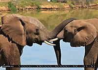 Asiatische und afrikanische Elefanten (Wandkalender 2019 DIN A2 quer) - Produktdetailbild 12