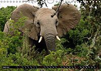 Asiatische und afrikanische Elefanten (Wandkalender 2019 DIN A4 quer) - Produktdetailbild 6