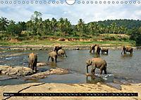Asiatische und afrikanische Elefanten (Wandkalender 2019 DIN A4 quer) - Produktdetailbild 3