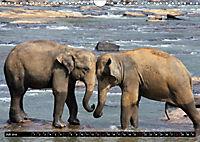 Asiatische und afrikanische Elefanten (Wandkalender 2019 DIN A4 quer) - Produktdetailbild 7