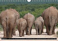 Asiatische und afrikanische Elefanten (Wandkalender 2019 DIN A4 quer) - Produktdetailbild 8