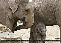 Asiatische und afrikanische Elefanten (Wandkalender 2019 DIN A4 quer) - Produktdetailbild 11